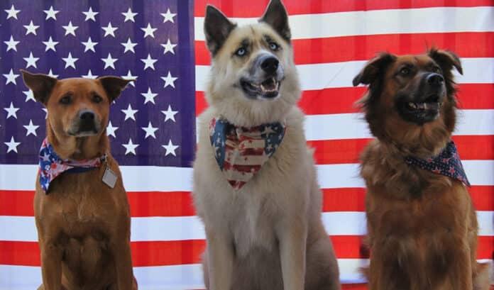 Dogs of the Dow (Perros del Dow), estrategia de inversión donde se seleccionan las acciones con mayores dividendos del Dow Jones